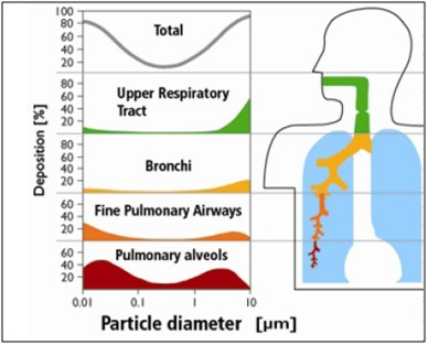 Diameter that will reach different segments of the respiratory system